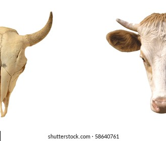 Conceptual image. Skull living and dead cows.