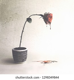 conceptual image of wounded love with a rose that cries blood