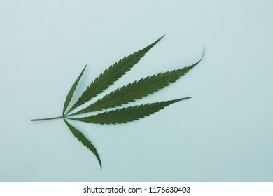 Conceptual order online. Concept of medicine, hemp. treatment of patients. a sheet of marijuana. blue background.