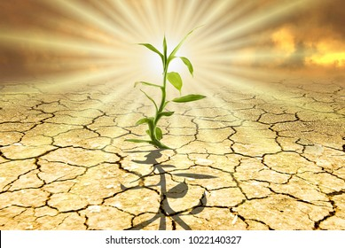 conceptual scene: in a dry and parched environment from a glaring sun, a small green seedling emerges from the dry ground