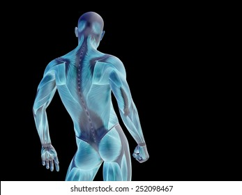 Conceptual strong human or man 3D anatomy upper body with muscle for health or sport on black background  as a metaphor for anatomy, body, medicine, muscle, bones, muscular, science, education, sport