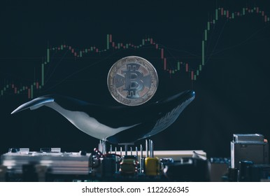 Concetptual image of Bitcoin whale holder with silver bitcoin on the back of whale figure with soaring stock trading graphs in background