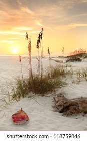 Conch Shell Sea Oates on a White Sand Beach at Sunset