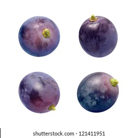 Concord Grapes Isolated on a white background