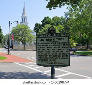 Concord, MA./US -070619: Jethro's Tree in Concord, MA.