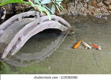 Concrete bridge in small decorated pond with three colorful koi fish