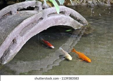 Concrete bridge in small pond having three koi fish swmiming around