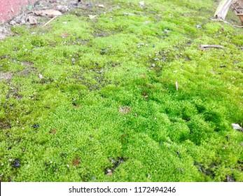 Concrete floor has bright green moss.