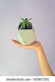 Concrete flower pots in hand
