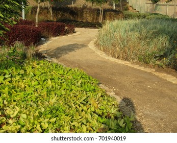 A concrete path with flowers on the sides