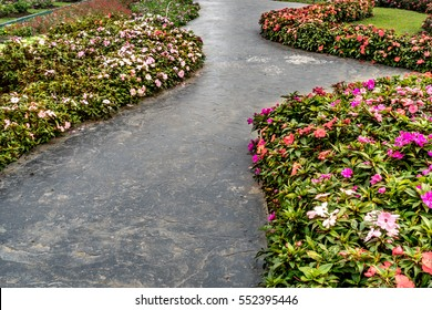 Concrete pathway with colorful flowers in the garden