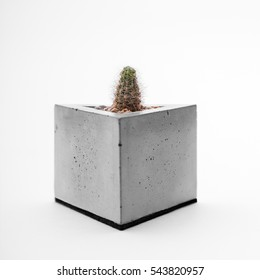 Concrete planters with cactus on a white background closeup