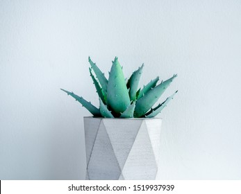Concrete pot. Close-up green aloe vera plant in modern geometric concrete planter isolated on white background.