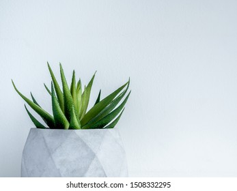 Concrete pot. Close-up green succulent plant in modern geometric concrete planter on wooden shelf isolated on white background with copy space.