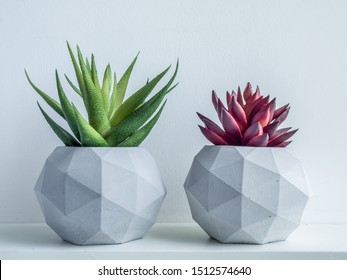 Concrete pot. Green and red succulent plants in modern geometric concrete planters on wooden shelf isolated on white background.