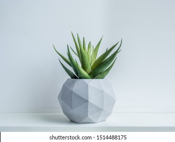Concrete pot. Green succulent plant in modern geometric concrete planter on wooden shelf isolated on white background.