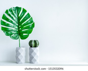 Concrete pot. Green tropical palm leaf and cactus plant in modern geometric concrete planters on white wooden shelf isolated on white background with copy space.