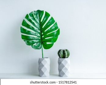Concrete pot. Green tropical palm leaf and cactus plant in modern geometric concrete planters on white wooden shelf isolated on white background.