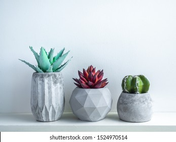 Concrete pot minimal style. Cactus and succulent plant in modern geometric concrete planters on wooden white shelf isolated on white background.