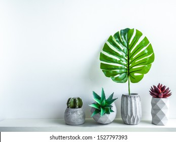 Concrete pot minimal style. Cactus, succulent plant and tropical palm leaf in modern geometric concrete planters on wooden white shelf isolated on white background with copy space.