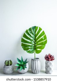 Concrete pot minimal style. Cactus, succulent plant and tropical palm leaf in modern geometric concrete planters on wooden white shelf isolated on white background vertical style.