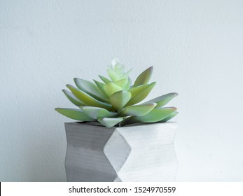 Concrete pot minimal style. Close-up green succulent plant in modern geometric concrete planter on wooden white shelf isolated on white background.