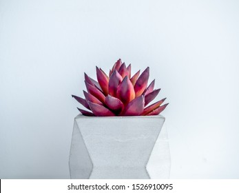 Concrete pot minimal style. Close-up red succulent plant in modern geometric concrete planter on wooden white shelf isolated on white background.