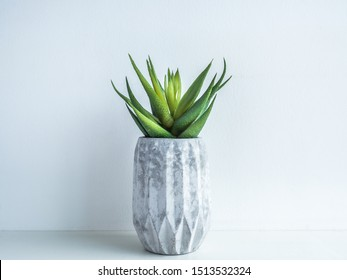 Concrete pot minimal style. Green succulent plant in modern geometric concrete planter on wooden shelf isolated on white background.