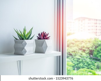 Concrete pot minimal style. Green and red succulent plant in modern geometric concrete planters on wooden white shelf near the window with sunshine.