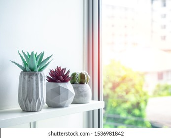 Concrete pot minimal style. Green cactus and red succulent plant in modern geometric concrete planters on wooden white shelf near the window with sunshine.