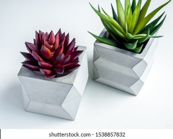 Concrete pot minimal style. Green cactus and red succulent plant in modern geometric concrete planters on white background.