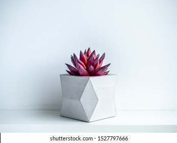 Concrete pot minimal style. Red succulent plant in modern geometric concrete planter on wooden white shelf isolated on white background.