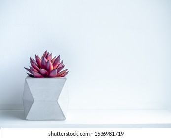 Concrete pot minimal style. Red succulent plant in modern geometric concrete planter on wooden white shelf isolated on white background with copy space.