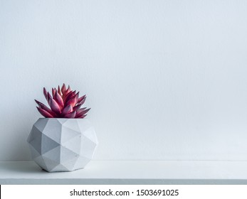 Concrete pot. Red succulent plant in modern geometric concrete planter on wooden shelf isolated on white background with copy space.