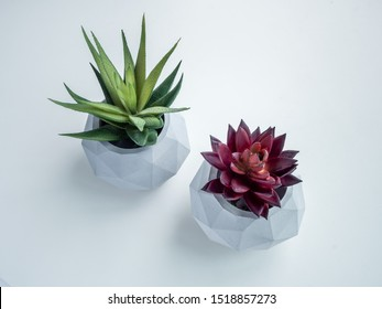 Concrete pot. Top view of green and red succulent plants in modern geometric concrete planters isolated on white background.