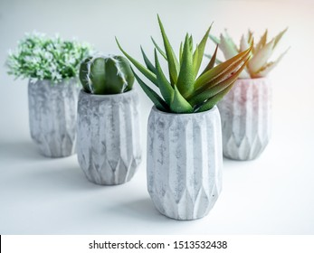 Concrete pots. Green cactus, white flowers and succulent plants in modern geometric concrete planters with sun light isolated on white background.