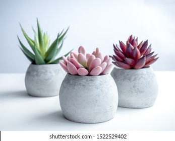 Concrete pots minimal style. Close-up pink, red and green succulent plants in modern round concrete planters on white background.