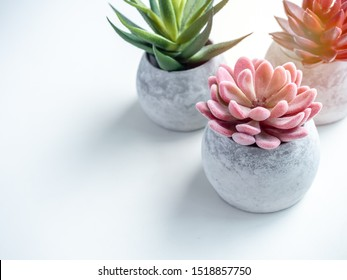 Concrete pots minimal style. Pink, red and green succulent plants in modern round concrete planters on white background with copy space, top view.