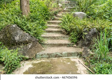 Concrete stair in the park with green moss and fern