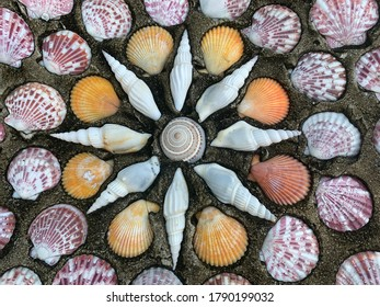A concrete wall with beautiful shells texture, exterior wall with colourful of different  shell