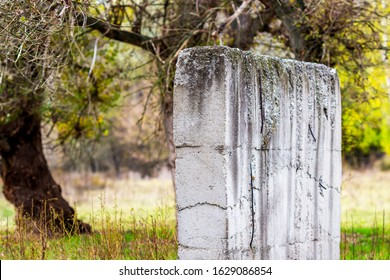 Concrete wall in front of blurred old poplar trees at Zlato Pole or Gold Field Protected Area, Municipality of Dimitrovgrad,Haskovo Province, Bulgaria, selective focus, shallow depth of field - Shutterstock ID 1629086854