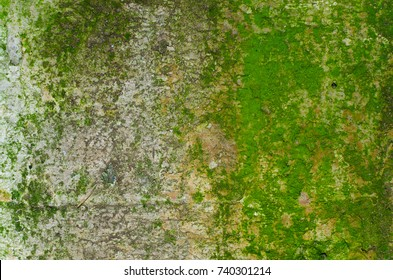 A concrete wall texture with a lot of green moss with a shallow hole on the right and a bulging strip of cement at the bottom.