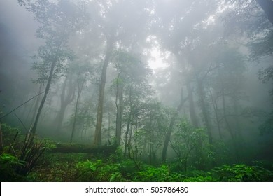 Condition of the forest in the rain forest on Mount Mokoju,Kamphaeng Phet, Thailand