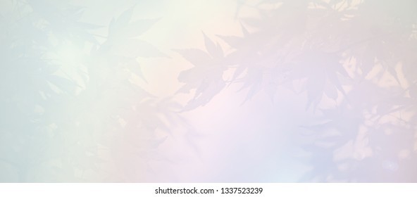 condolence background - light pastel color with maple leaves. sympathy card background.