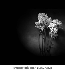 Condolence card with flower - black and white