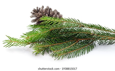 Cone and christmas tree isolated on a white background.