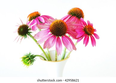 Cone Flowers (Echinacea purpurea) at various stages of development in a gold-rimmed vase.