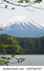 The cone of Mt Fuji seen from the Five Lakes District. Green forest borders the lake, and branches of a tree are in the foreground. The sky is overcast.