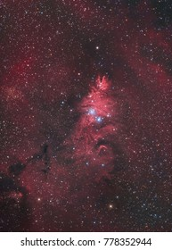 The Cone Nebula and the Christmas Tree Cluster (NGC 2264) in the constellation Monoceros