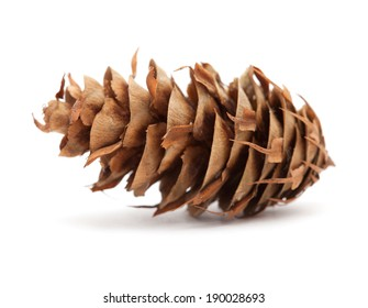 cone of Pseudotsuga menziensii isolated on white
